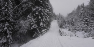 Harz Winter